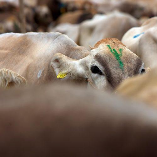 مصرف گوشت
